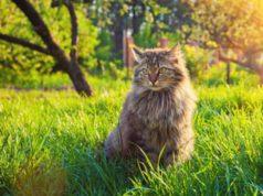 répulsifs naturels contre les chats